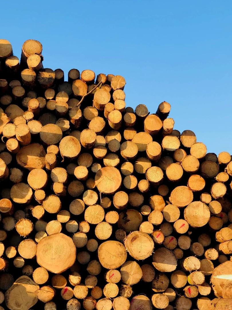 drewno-10.jpg