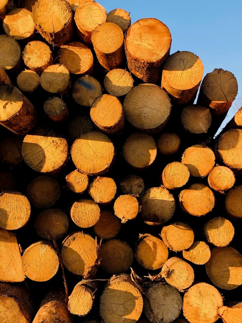 drewno-11.jpg