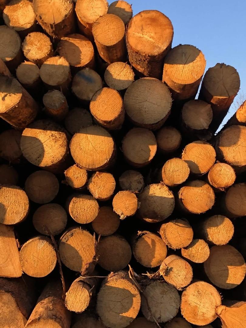 drewno-12.jpg