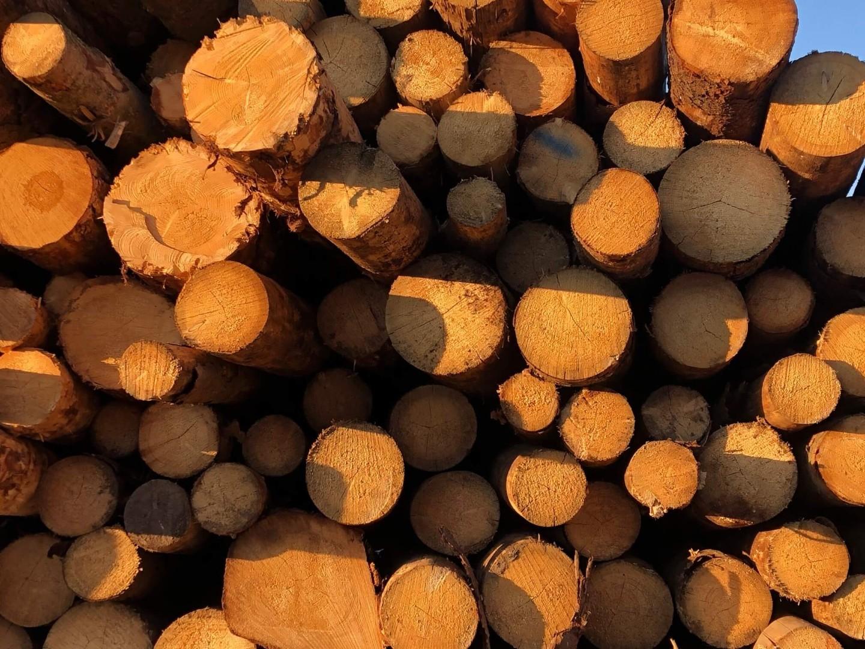 drewno-13.jpg