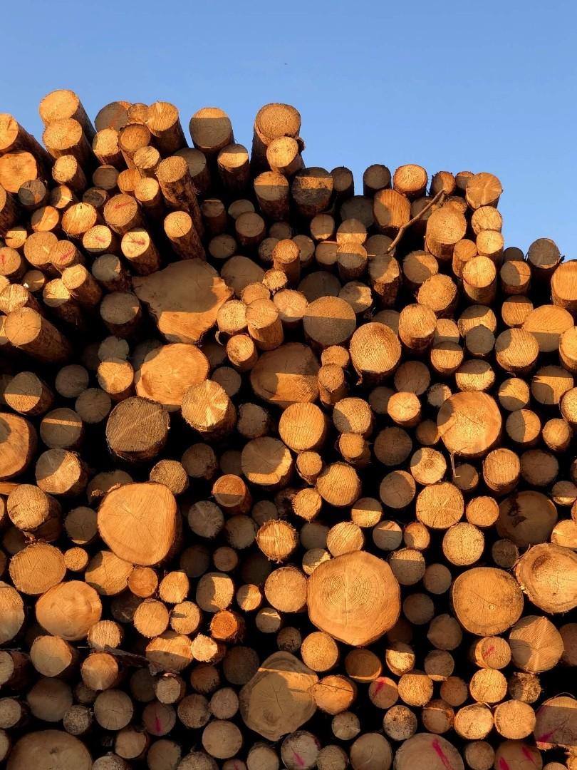 drewno-14.jpg