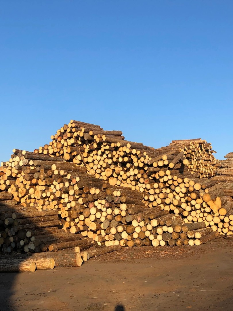 drewno-2.jpg