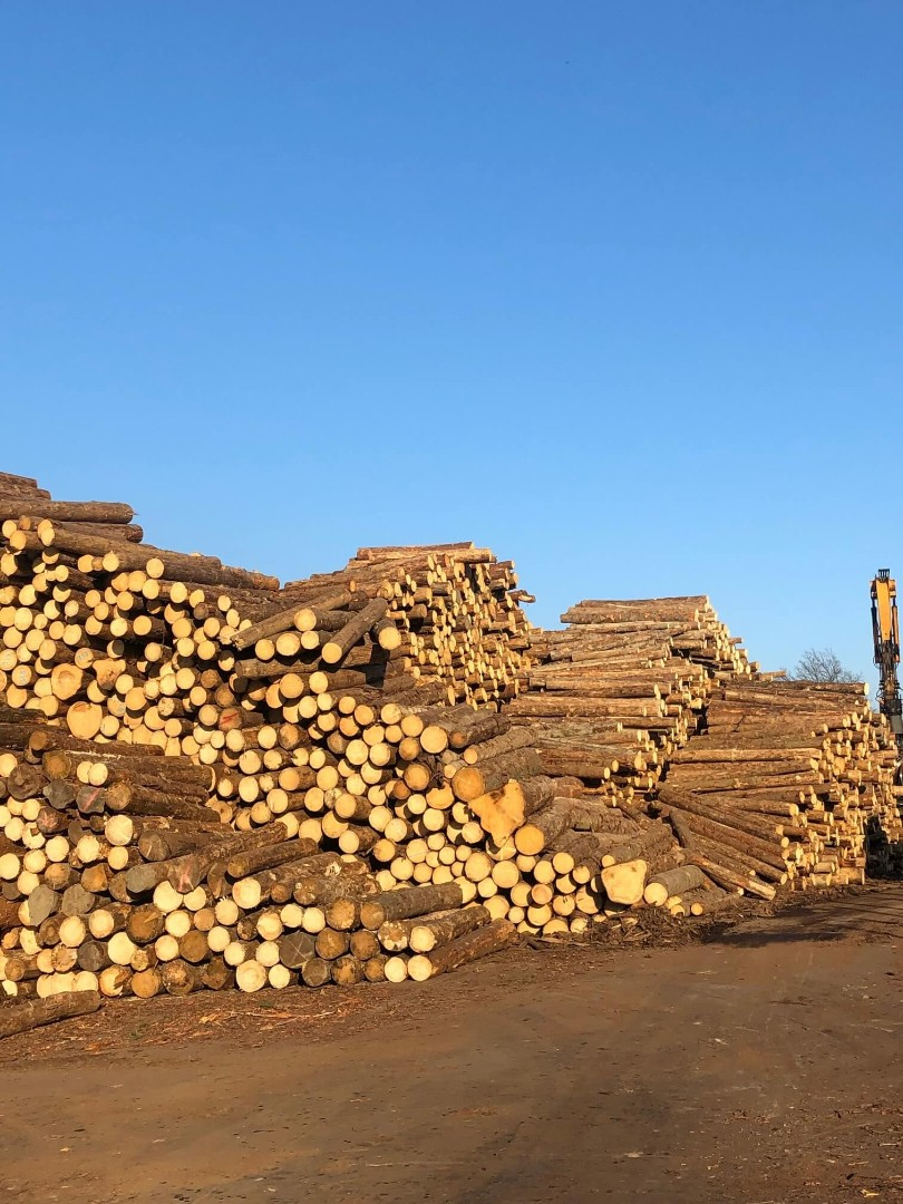 drewno-3.jpg