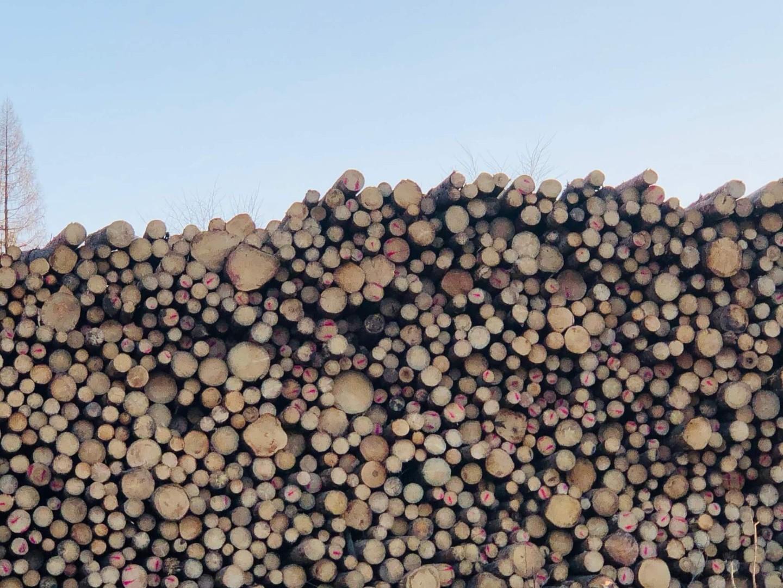 drewno-5.jpg