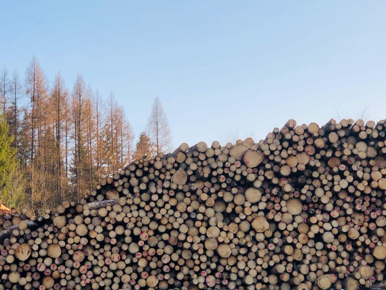 drewno-6.jpg